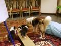Bilder aus der Hundeschule