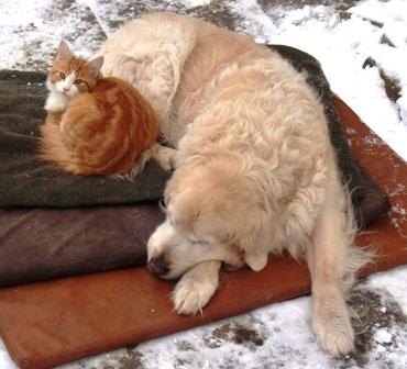 Hund Nicki und Kater Leo