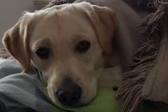 Astrid-Hoehl-Jackie-Familienhund