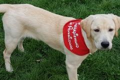 Astrid-Hoehl und Golden Retriever - Labrador - Mix Hündin Jackie in der Ausbildung zum Therapie-Hund-Team in der Hundeschule Teamwork Anke Rochelt in Stadtallendorf