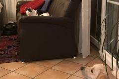 Astrid-Hoehl-Jackie-und-Katze