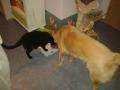 Hazel und Oskar