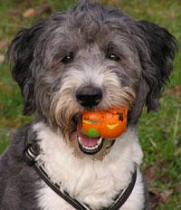 Informationen für den ersten Besuch in der Hundeschule