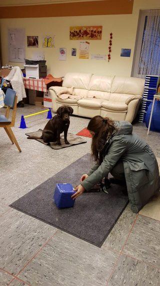 Luna lernt das Abwarten, während Anna eine Übung mit dem Würfel vorbereitet.