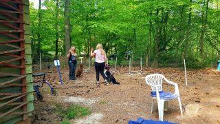 Begrüßungsübung: Hunde bleiben gelassen und freudig