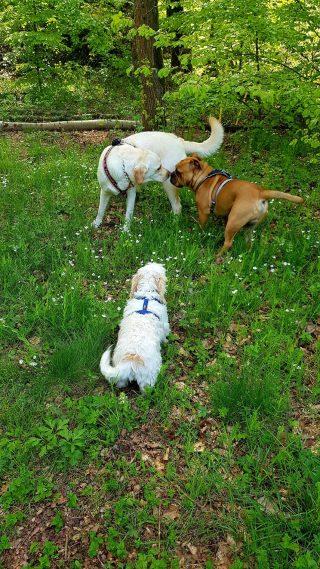 Freispielphase im Mensch-Hund-Teamkurs